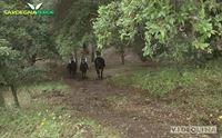 a cavallo a villavidro