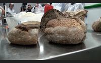 alghero dai laboratori di porto conte ricerche i segreti del pane