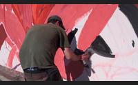 masullas un nuovo volto al paese con la street art