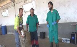 daniele musino veterinario