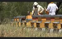 nuoro i giovani studiano da apicoltori il miele pu darci un futuro