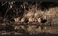 nel nuorese ambientalisti e cacciatori uniti non sparate a lepri e pernici