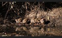 i cacciatori replicano agli ambientalisti