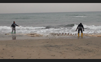 sorso gli esperti analizzano la balena lo scheletro incompleto