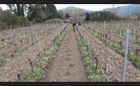 terre ai giovani via al secondo bando l agricoltura ha un futuro