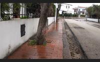 sassari taglio di alberi a s orsola il quartiere si divide