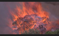 l estate si avvicina una volpe testimonial della prima campagna antincendio