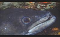 alghero teleia un tuffo virtuale nell area marina di porto conte