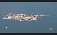 cagliari a su siccu dopo i pesci morti arrivano i ratti scappano i turisti