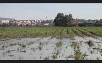 samassi raccolti distrutti dopo due settimane di pioggia torrenziale