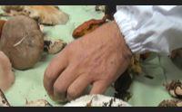 sassari nuove intossicazioni da funghi occhio a quelli sosia