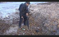 alghero analisi nel deposito di posidonia le chiedono gli ambientalisti