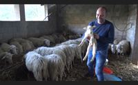 iglesias il pastore che fa da solo