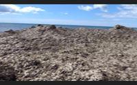 pula spiagge invase da alghe ci ha pensato il mare a ripulire il litorale