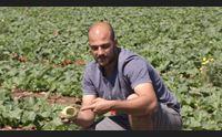 cornacchie all assalto dei campi del sinis agricoltori disperati