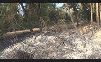 incendi in ogliastra un imprudenza avrebbe causato il disastro