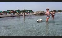 tutti al mare con fido nella spiaggia animal friendly di porto pino