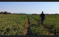 (da allegare)oristano cornacchie e cinghiali una piaga per gli agricoltori