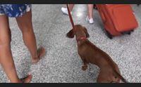 olbia l aeroporto costa smeralda diventa amico degli animali