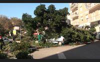 cagliari crolla l albero di via dei giudicati