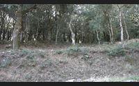 orani la rinascita di gonare diventer un grande parco naturale
