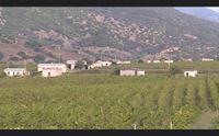 arzana vigne di quirra vendemmia dopo 70 anni