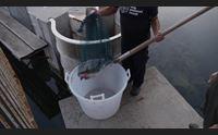 arbatax la bottarga dei pescatori premiata dagli accademici