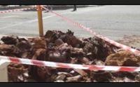 cagliari alberi che cadono mappatura a tappeto in citt