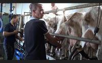 ollolai i prodotti della longevit un marchio sfida per 32 pastori