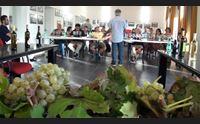 nuragus la sfida dei produttori agricoli vitigno da rilanciare