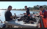 la rinascita di santa gilla i pescatori abbiamo fatto tutto da soli