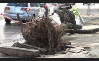 i danni del maltempo a sassari alberi crollati e auto distrutte