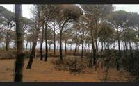 arborea sopralluogo nella pineta bruciata potr rinascere