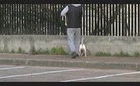 sassari cani che sporcano linea dura contro i padroni distratti