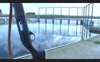 cormorani le regione firma il decreto riprendono gli abbattimenti