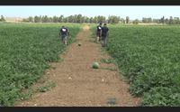l agricoltura respira stanziati dalla regione 9 milioni di contributi