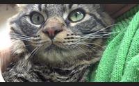 virus e animali domestici non contagiano ma possono essere infettati