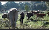 birori pastori del marghine sul piede di guerra traditi dalla regione