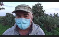 pabillonis la pioggia devasta le colture il comune chiede stato di calamit