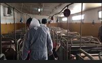 sassari i veterinari alla regione ora i vaccini anche per noi