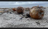 alghero operazione spiagge pulite tutto l anno