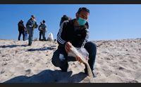 sardegna depredata torna a is arutas la sabbia sequestrata ai turisti