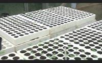 dopo la direttiva della procura di cagliari coltivazioni di canapa a rischio