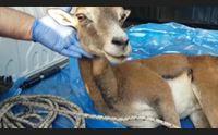 olbia accordo ages ats al via il pronto soccorso per animali feriti